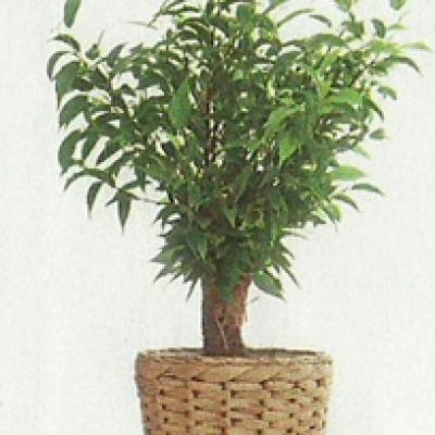 تصفیه هوا توسط گیاهان آپارتمانی
